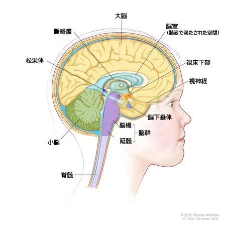 小児がん患者とご家族のために CureSearch » 脳腫瘍(中枢神経系 ...